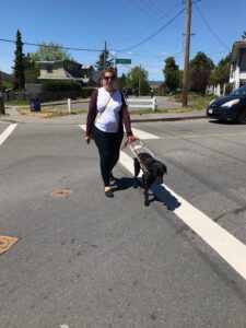 A photo of Shauna and guide dog, Barney, taken in May 2021, in their home area of Victoria, British Columbia. They are crossing a street. This is a front facing view of Shauna and Barney working. Shauna is wearing her long blonde hair pulled back in a ponytail, and is wearing a white T-shirt, navy blue jeans, a burgundy cardigan, black sketchers, and caring a bright yellow purse. She is also wearing dark sunglasses, that have silver frames. Barney is a black Labrador retriever, wearing his GDB harness, black Martingale collar, black gentle leader, and brown leather leash.
