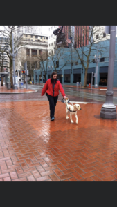 A photo of Shauna and guide dog, Prego, taken downtown Portland, Oregon in February 2013. Prego is a yellow Labrador retriever, and is wearing his GDB harness, collar, and leash. The day this photo was taken, the weather was cold, wet, windy, and pouring down rain. Shauna is wearing a waterproof red coloured hooded jacket, black rain pants, and waterproof blue coloured running shoes. This photo is a clear view of handler and guide dog working in the downtown area of Portland, with city office buildings, and other urban buildings in the background.